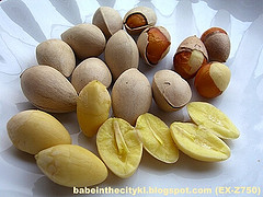 ginkgo nuts picture